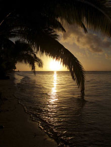 Tropical sunset with coconut palm over water